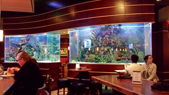 Hampton Inn Baltimore-Downtown-Convention Center: Fish Tank at Kona Grill