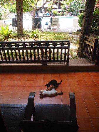 NovaSamui Resort Koh Samui : お部屋