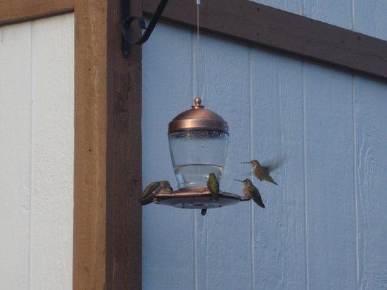 Americas Best Value Sundowner Motel : Cute birdies at the premises 2