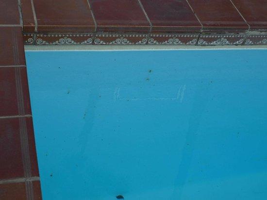 Tucanes Gay: Poolhygiene ?