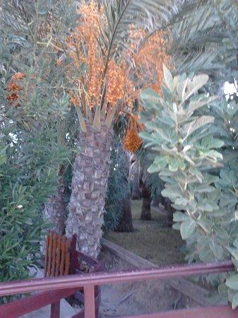 Akti Beach Village Resort: Растительность при отеле