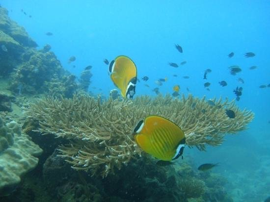 Discovery Dive Centre: so many amazing things to see!