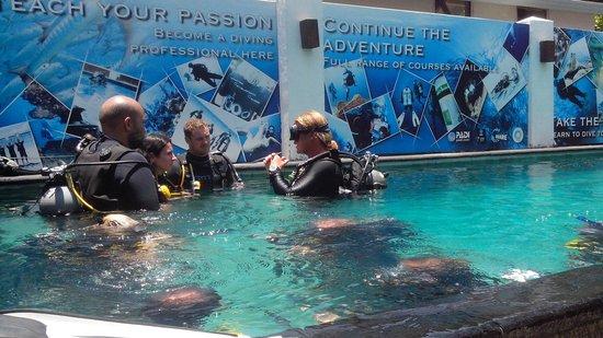 Trawangan Dive Resort: Adam teaching in the pool