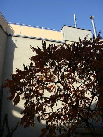 Altstadt Pension im Hollanderviertel: Dejligt, stille med udsigt til smukt træ