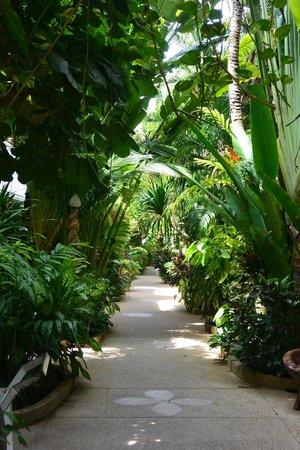 White House Beach Resort & Spa: chemin d'accès vers piscine-plage