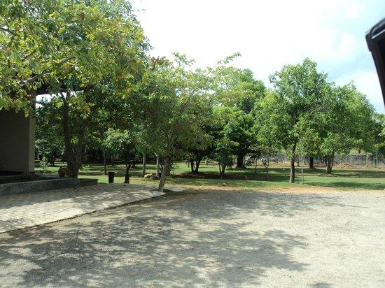 Kassapa Lions Rock: Garden