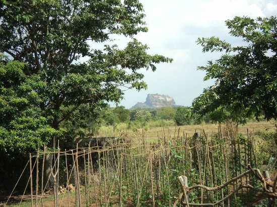 Kassapa Lions Rock: View of Sigiriya from Hotel