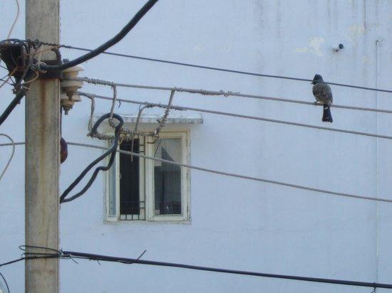 Art Inn Jaipur: a beautiful bird from my window