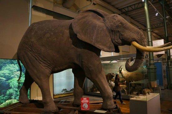 Museo Nacional de Ciencias Naturales (Museum of Natural Sciences): A gigantic elephant.