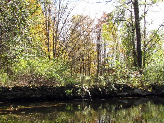 Sivananda Ashram Yoga Ranch : Pool for reflection in woods