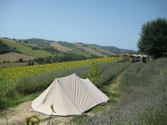 Lavanda Blu Agriturismo: campsite and stunning view