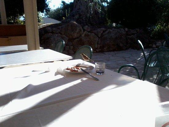 Grecotel Daphnila Bay Dassia: guêpes et moineau