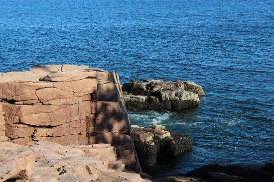 Ocean Trail: Coastal cliff