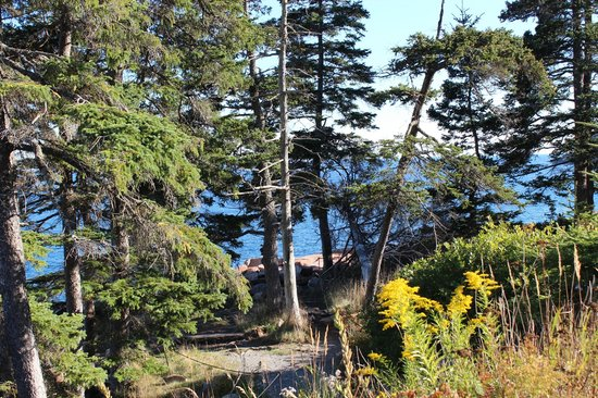 Ocean Trail: Wooded along some of the pathway