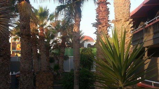 Gran Hotel Natura : The garden