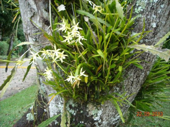 San Martin Resort & Spa: Orchids in the trees of the hotel garden