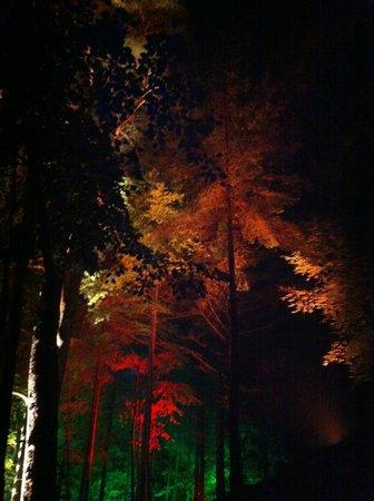 Faskally Wood: Autumn