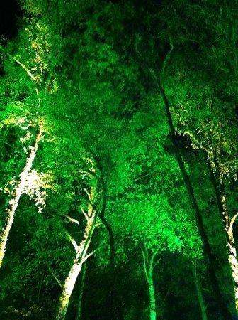 Faskally Wood: One type of tree