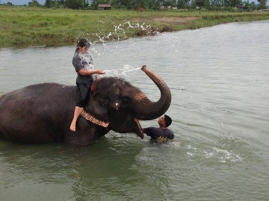 Narayani River : elephant bath