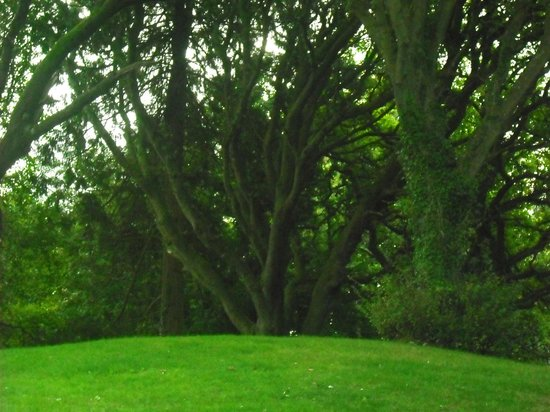 Dromoland Castle Hotel: Woods