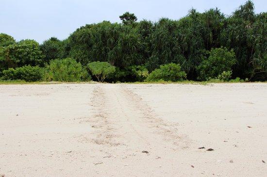 Lankayan Island Dive Resort: Turtle way