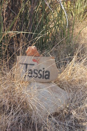 Tassia Lodge: Tassia
