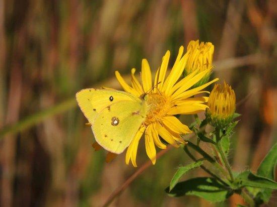 Minnesota Landscape Arboretum : Butterfly