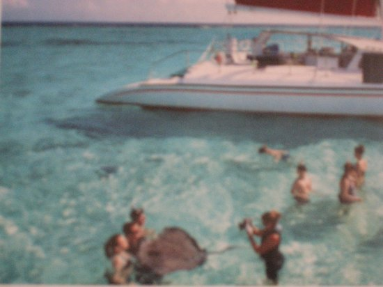 Wyndham Reef Resort: swimming with the stingrays at stingray city **MUST DO***