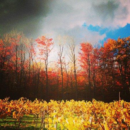 Kava Tours : Wine Tasting in Montérégie (Les Murmures Vineyard)