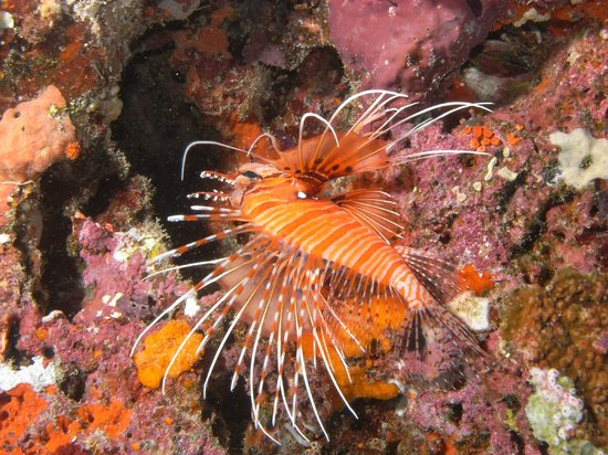 Euro Divers: House Reef 3
