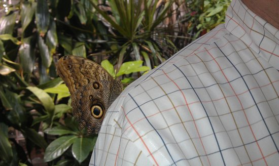 Academy of Natural Sciences of Drexel University: Butterfly companion