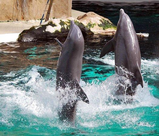 Zoo Duisburg: Delfinshow