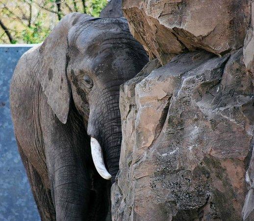 Zoo Duisburg: Elefant