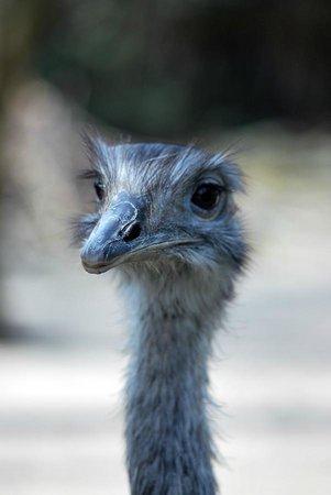 Zoo Duisburg: Emu