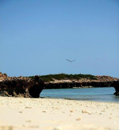 Daymaniyat Islands Nature Reserve: Seagulls