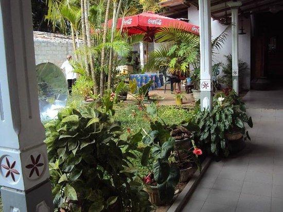 Saman's Guesthouse: Garden