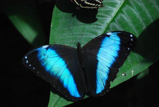 La CasaBlanca: Butterfly farm