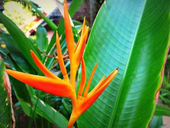 Samui Paradise Chaweng Beach Resort: Schöne Bepflanzung