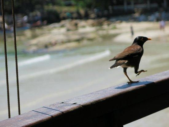 Samui Paradise Chaweng Beach Resort: Auf der Terasse