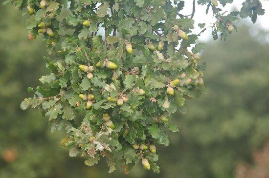 Terre di Nano: Olive Trees!