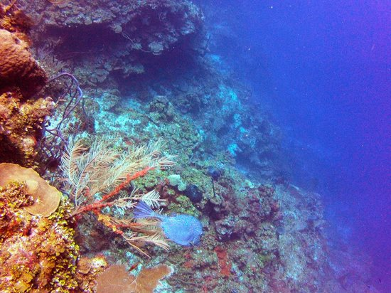 Reef House Resort : wall