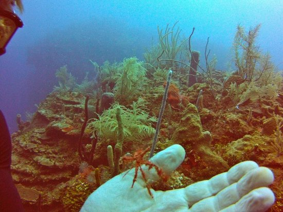 Reef House Resort: spectacular reefs
