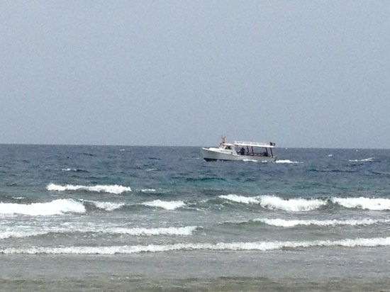Reef House Resort: dive boat heading out