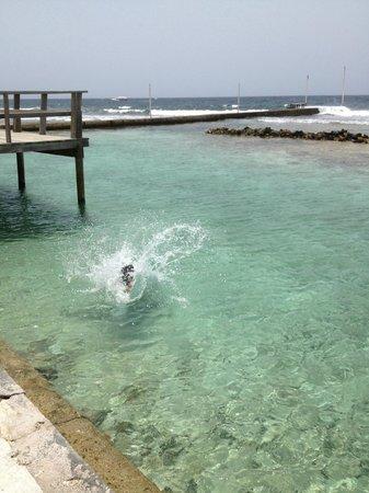 Reef House Resort: Best hotel pool ever!