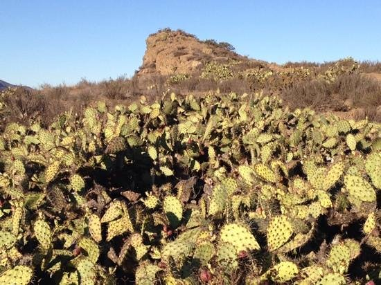Paradise Falls : Beautiful cacti line the Stagecoach Bluff Trail