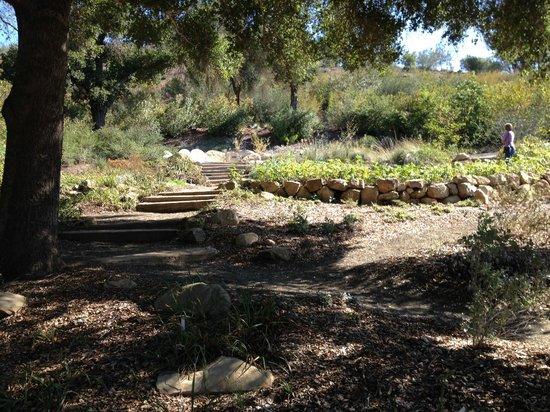 Tree Picture Of Santa Barbara Botanic Garden Santa Barbara Tripadvisor