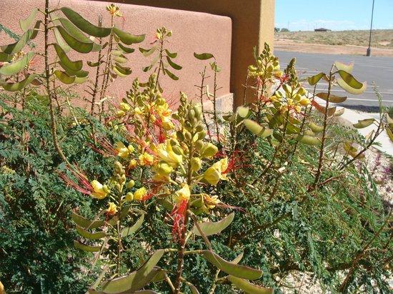 Moenkopi Legacy Inn & Suites : pretty gardens