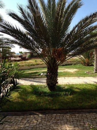 Hotel Morabeza : Die Palme vor meinem Zimmer