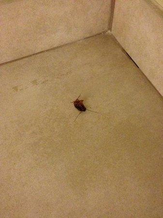 Super 8 Savannah: Dead (or fast asleep) roach under the bathroom sink.
