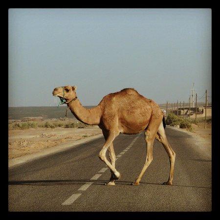 Rutas Por Marruecos Travel Services, S.a.r.l.: MERZOUGA